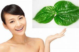 Trị nám bằng lá trầu: Bạn đã thử phương pháp trị nám da bằng lá trầu không vi diệu này chưa?