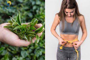 Giảm cân bằng trà xanh có hiệu quả không? Giải đáp chính xác nhất